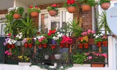 Fantastičan trik kako da vam cvjetni balkon izgleda raskošno!