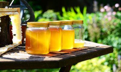 Blago iz prirode: Nemjerljive vrijednosti meda!